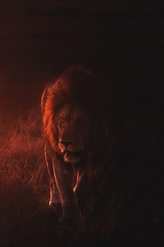 Bărbatul din Zodia Leului, imagine de Keyur Nandaniya@keyursphotography